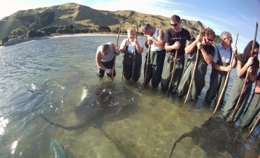 Tourists, standing shin-deep in water, get a close-up encounter with a ray.